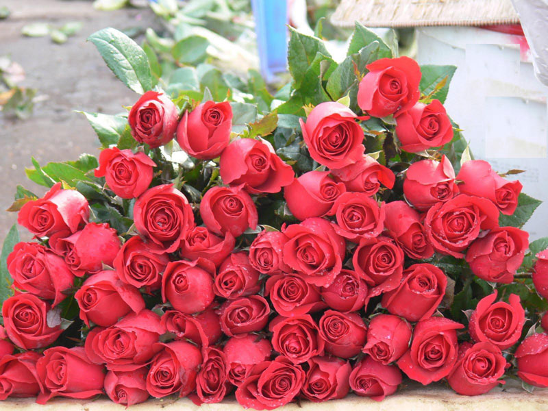 Buy Fresh Rose Flowers from Angel Exports, India | ID - 387250