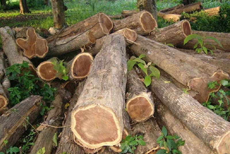 Teak Wood Logs Manufacturer In Chennai Tamil Nadu India By