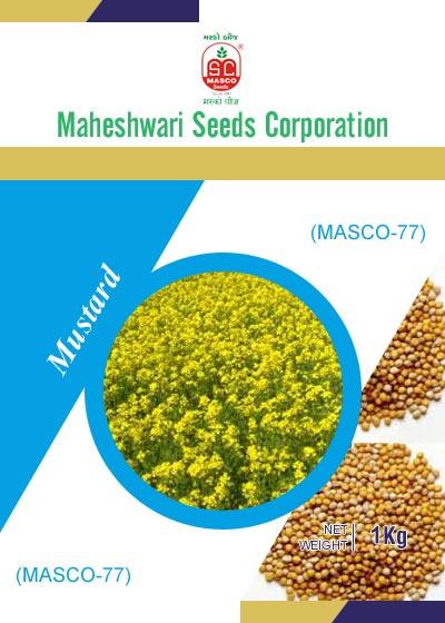 Masco-77 Mustard Seeds