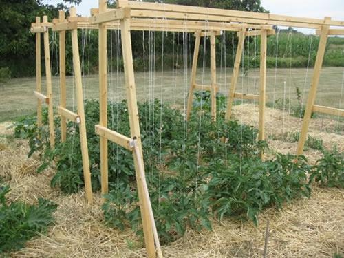 Buy Cucumber Trellis From Garden Trellis Netting Co Ltd