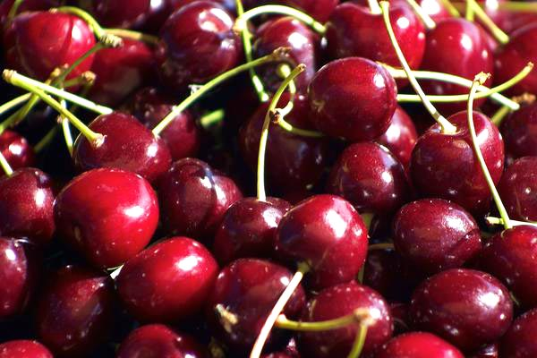 Fresh Cherry Fruit Manufacturer In Suratthani Thailand By