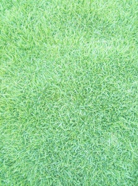Services - Mexican Carpet Grass from New Delhi Delhi India ...