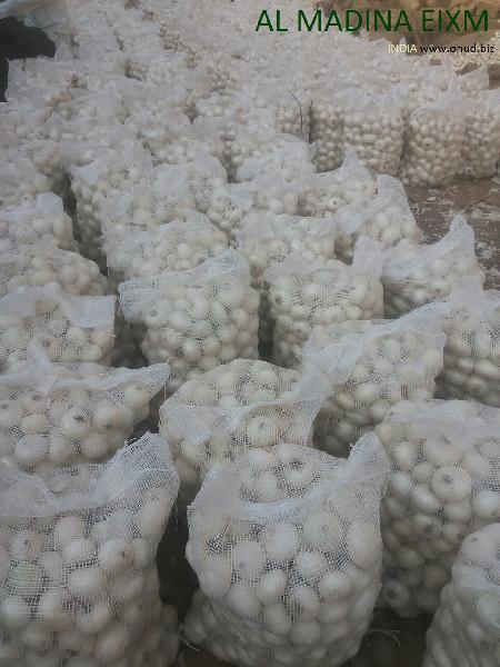 white onion (777)