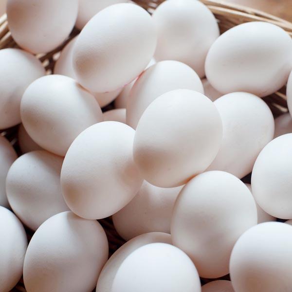 White Chicken Eggs (73220)