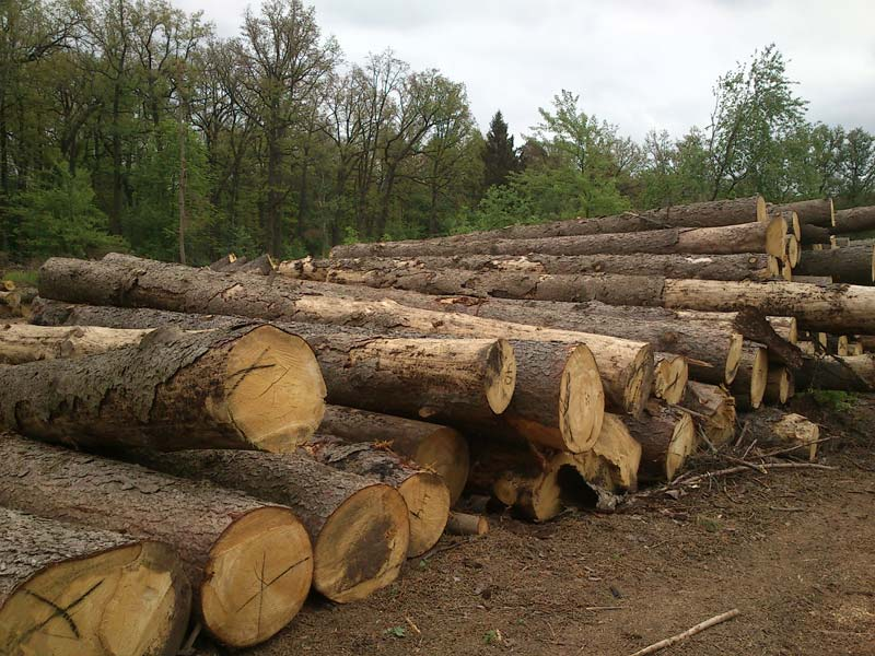 Pine Logs Manufacturer & Manufacturer from, Ukraine