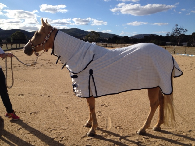 Horse Summer Cotton Rugs Manufacturer