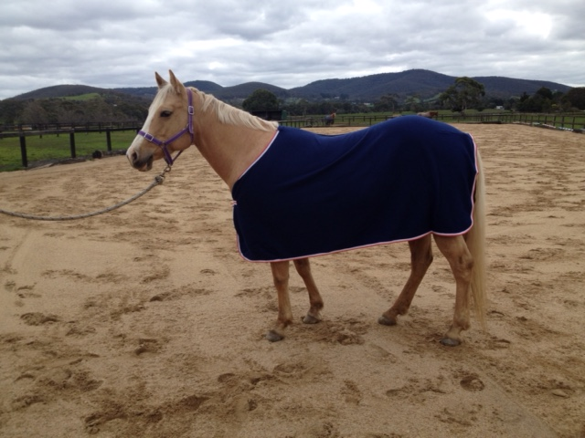 Horse Turnout Winter Rugs Manufacturer