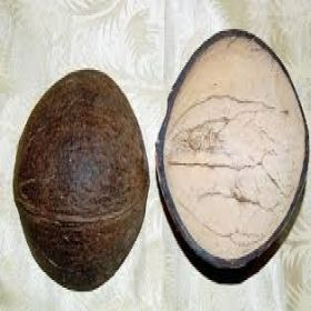 Coconut Shell Ice Cream Cups