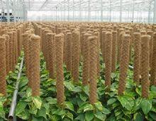 Grow Plant Pole Coir