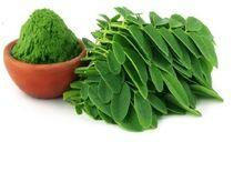 Dried Moringa leaves powder
