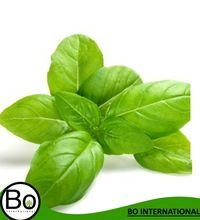 Basil Organic Essential Oil