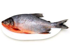 Fresh Roopchand Fish