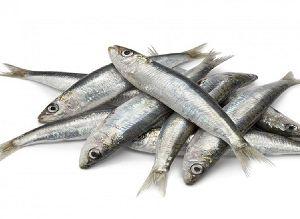 Fresh Silver Sardine Fish