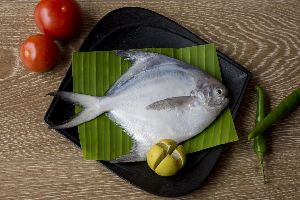 Fresh White Pomfret Fish
