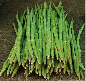 Vegetable Drumstick Moringa Oleferide