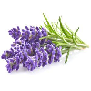 Aromatherapy Lavender Oil