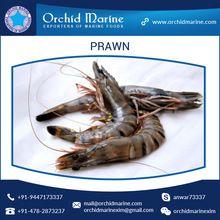 Black Tiger Prawn Or Shrimp