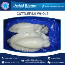 Cuttlefish Seafood