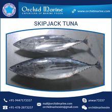 Frozen Seafood Skipjack Tuna