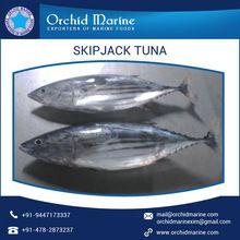 Round Skipjack Tuna