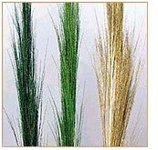 Broom Grass