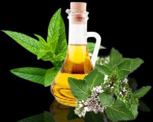 Mint Mentha Essential Oil