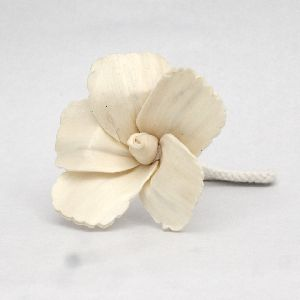 Decorative Hibiscus Sola Flower