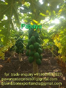 Fresh Green Papaya