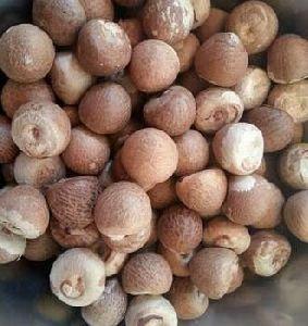 Betel Nuts (Dried)