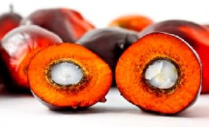 Palm Oil Fat Powder
