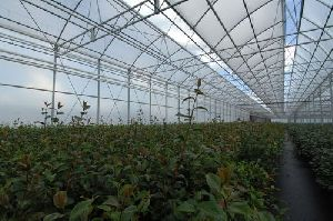 Top Ventilation Multispan Greenhouse