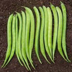 Maruti Nilima (guar Seeds)