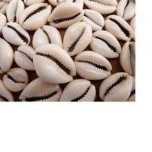 Custom Made Natural Cowrie Shells