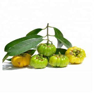 Pure Herbal Garcinia Cambogia Extract