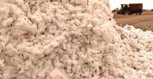Raw Unmined Cotton