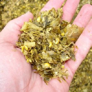 Corn Silage For Animal Feed