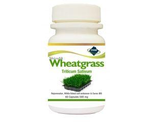 Shivalik  Wheatgrass Capsules