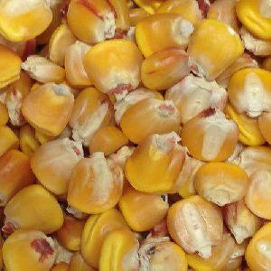 Organic Corn Seeds