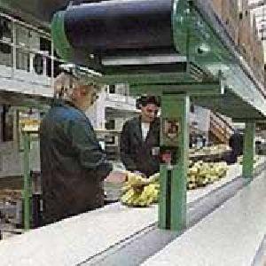 Hygienic Conveyor Belt