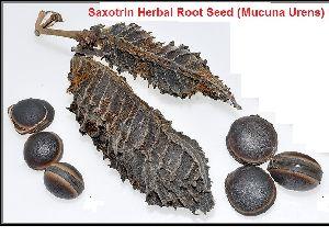 Parcostic Herbal Seeds / Saxotrin Herbal Root Seed