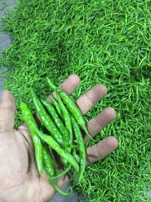 Fresh Green g4 Chilli