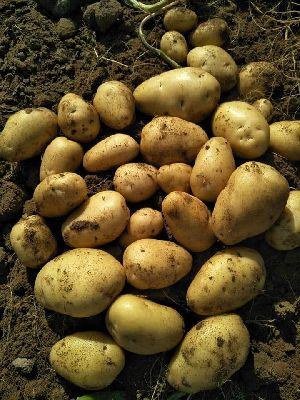 locker Potato