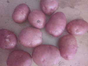 LR red potato
