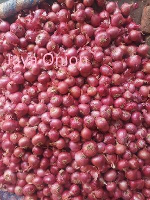 Fresh Onion in Chennai - Manufacturers and Suppliers India
