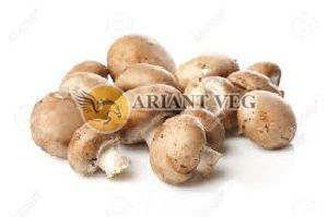 Fresh Brown Mushroom
