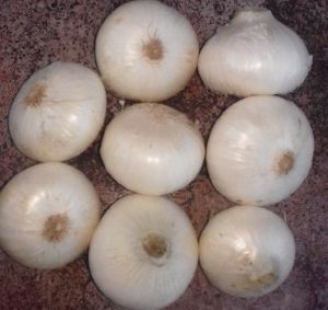 Red Onion Suppliers, Manufacturers & Exporters UAE - ExportersIndia