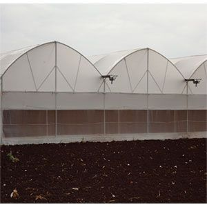 Fan & Pad Greenhouse