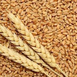 Wheat Sorter