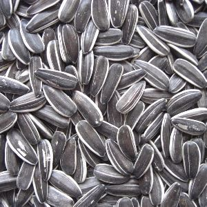 100% Organic Raw Sunflower Seeds
