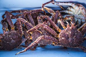 frozen and live king crabs available
